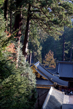 nikko rooftop and trees