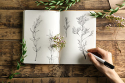 wonderwanderful nature creativity