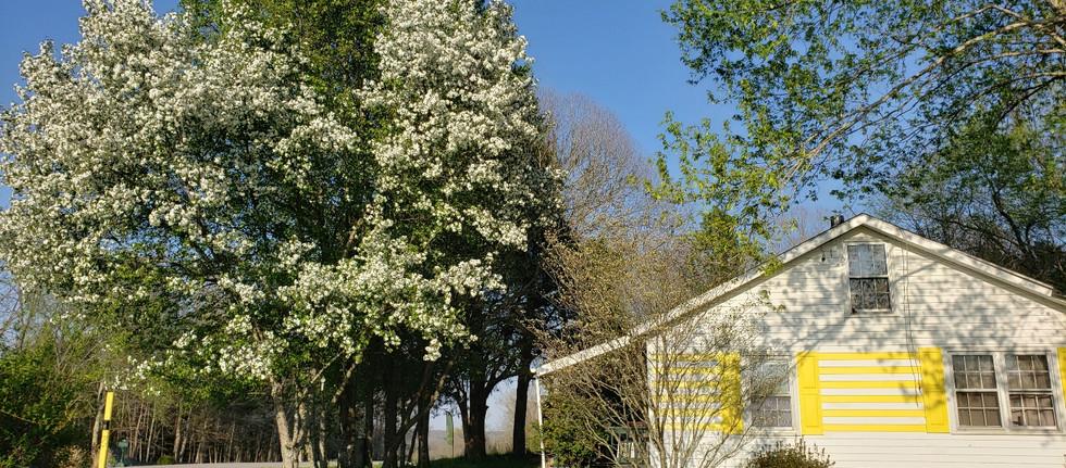 lemonlodge-exteriorspring.jpg