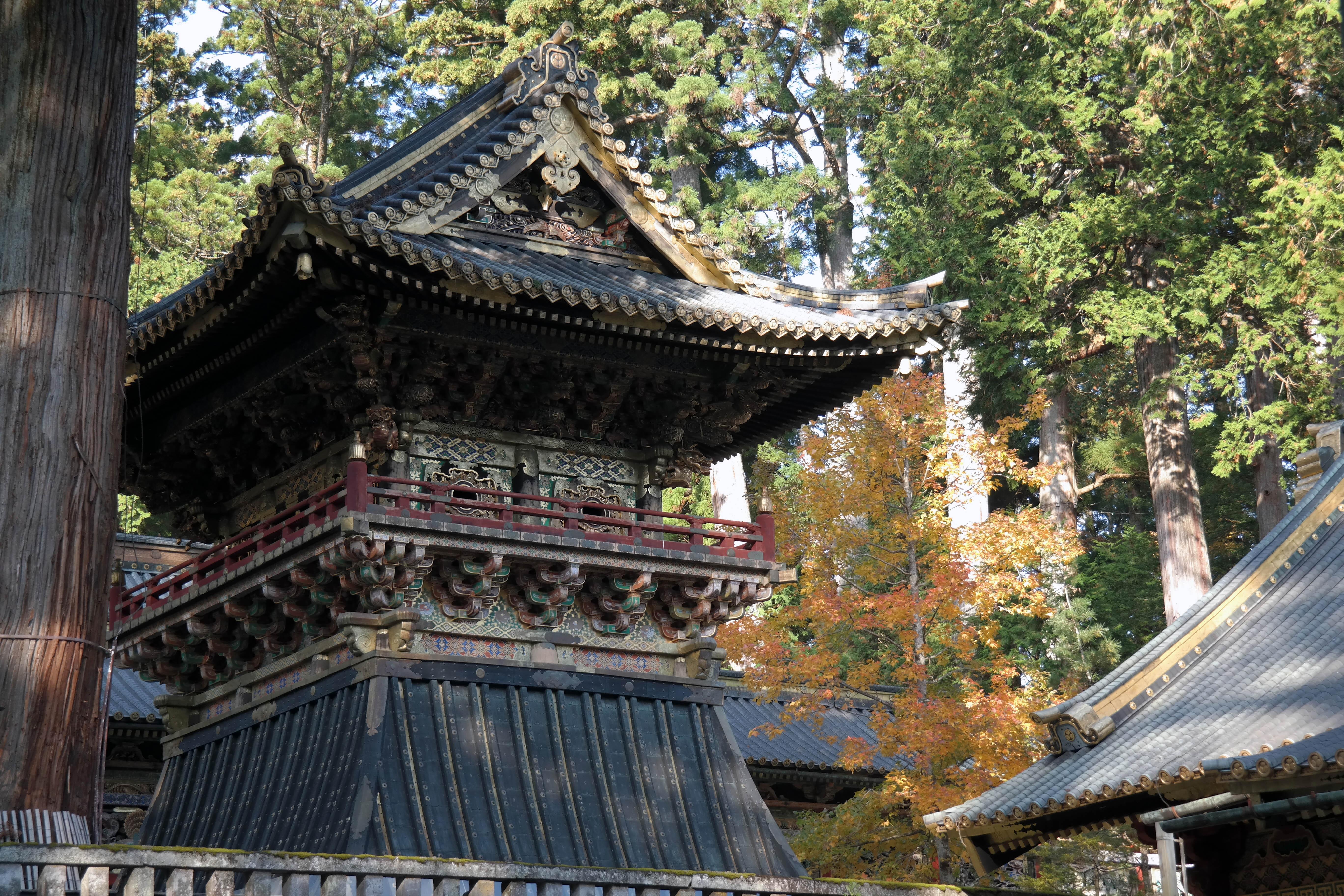 nikko foliage