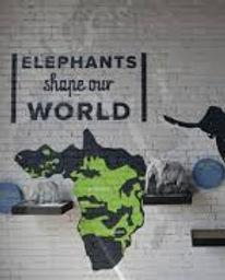 elephantdiscoverycenter.jpg