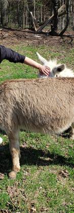 campwonderwander_hannah_donkeys.jpg