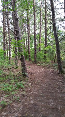 wonderwanderful forest