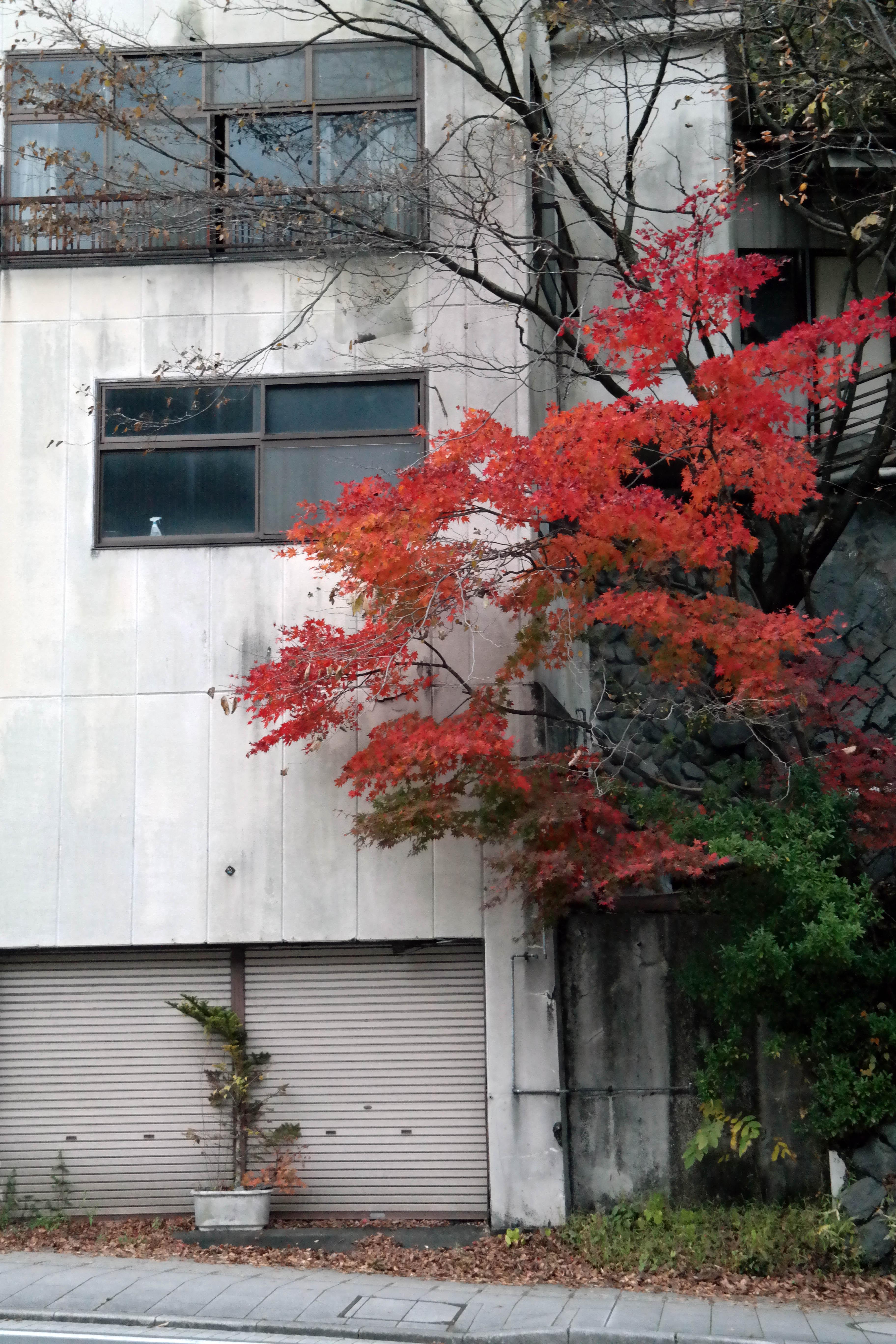 nikko glistening wabi sabi