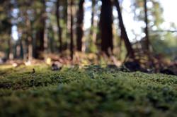 nikko nature closeup