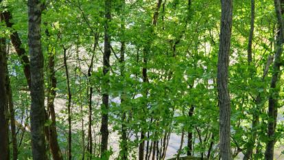 campwonderwander_forest1.jpg