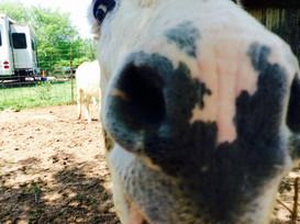 love donkey noses