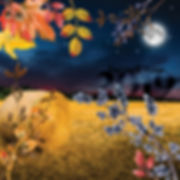 harvest moon collage crop-01.jpg