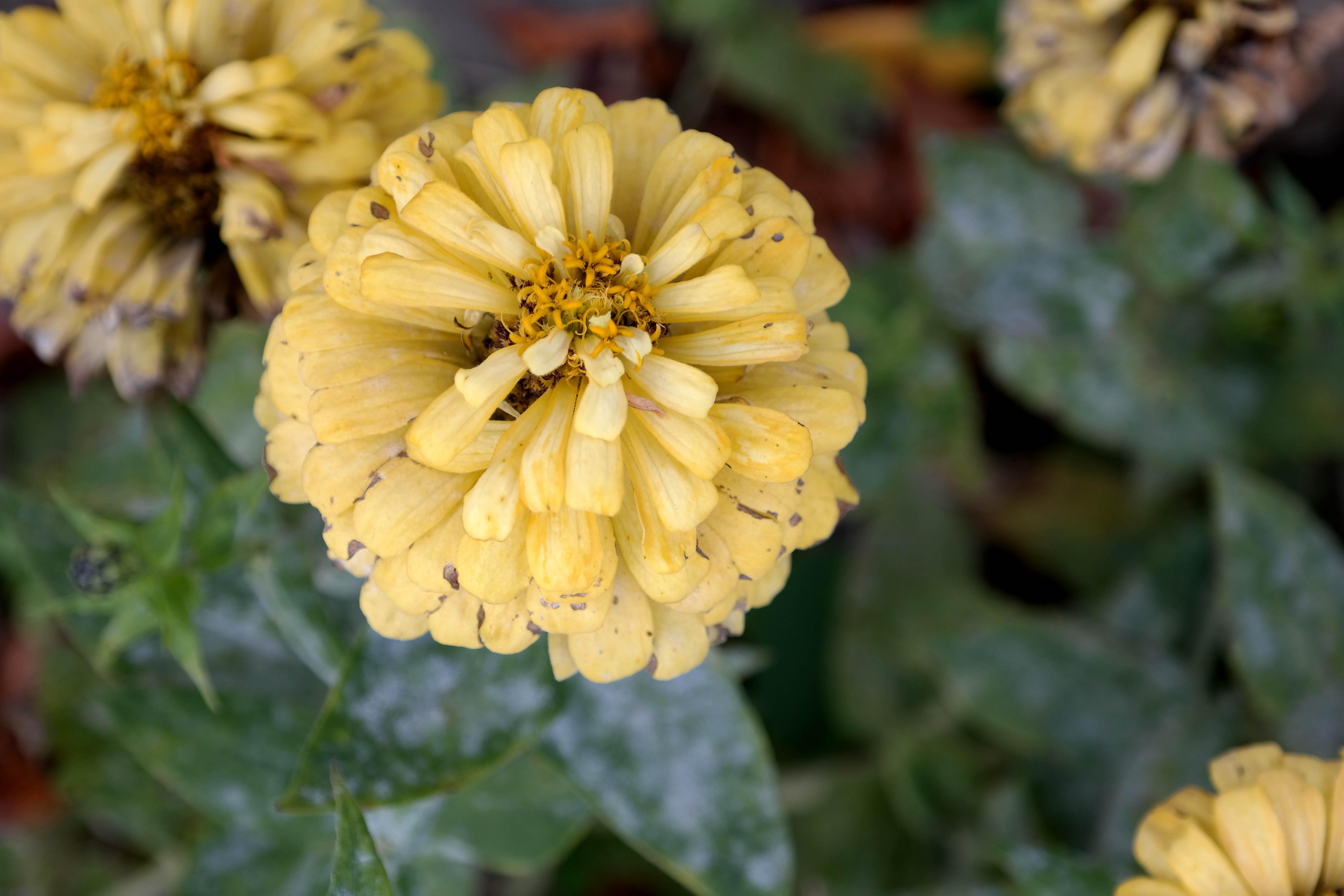 kitakata flowers
