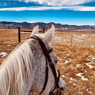 Trail rides for the horses soul
