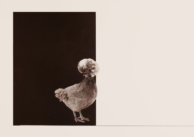 crinitus pullum (a fluffy chicken)