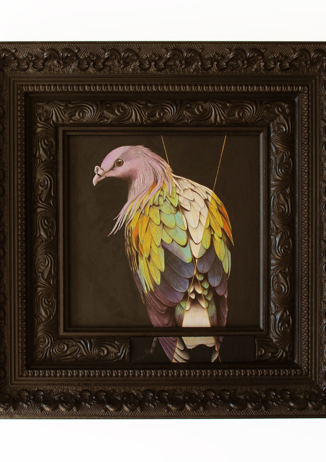 Nicobar Pigeon with Segmented Pigmentation