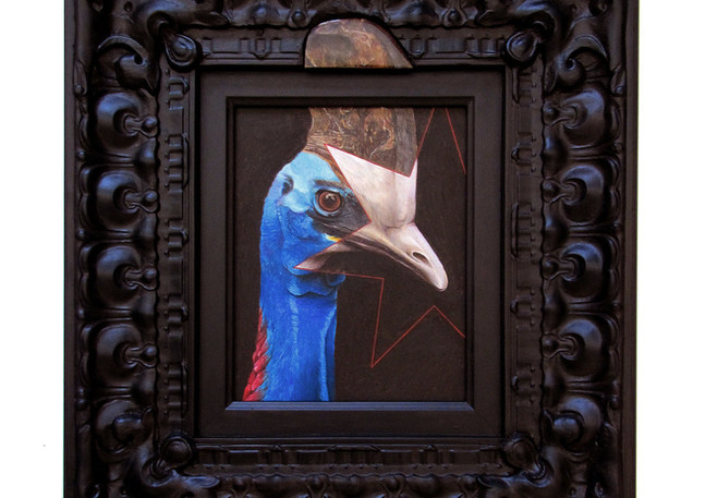 Southern Cassowary Branded with a Partial Aussie Swazi