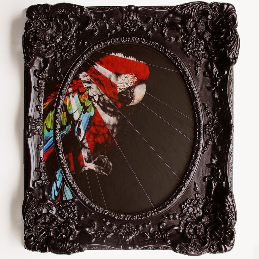 Scartlett Macaw with Segmented Pigmentation