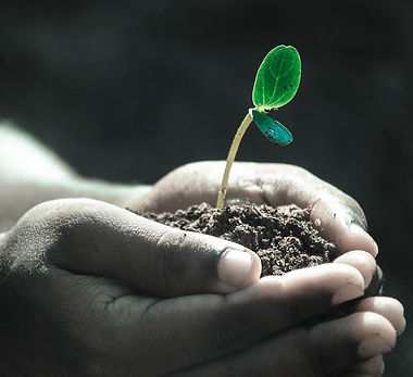 Jong plantje in handen.jpg