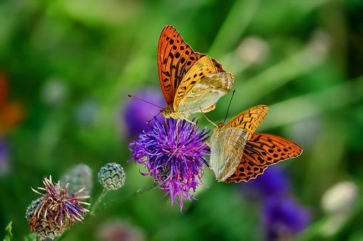 nature-3205038_1920.jpg