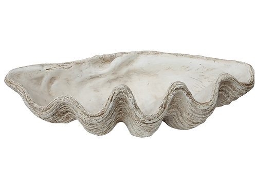 White Magnesia Seashell Decoration