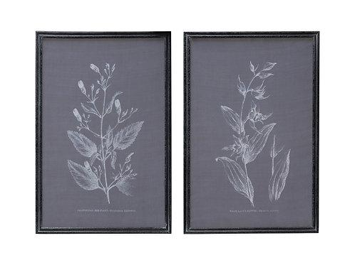 Botanical on Transparent Silk Screen Wall Decor (Set of 2 Styles)
