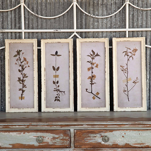 Pressed Botanical Framed Prints, 4 Assorted Styles