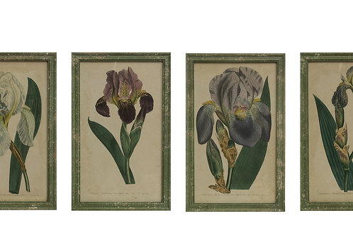 Vintage Reproduction Iris Flower Wall Decor (Set of 4 Styles)