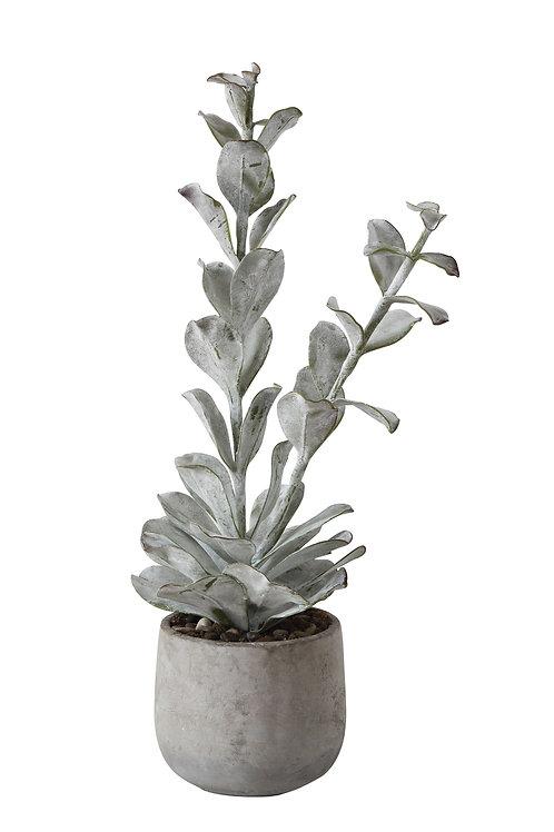 Faux Succulent in Cement Pot