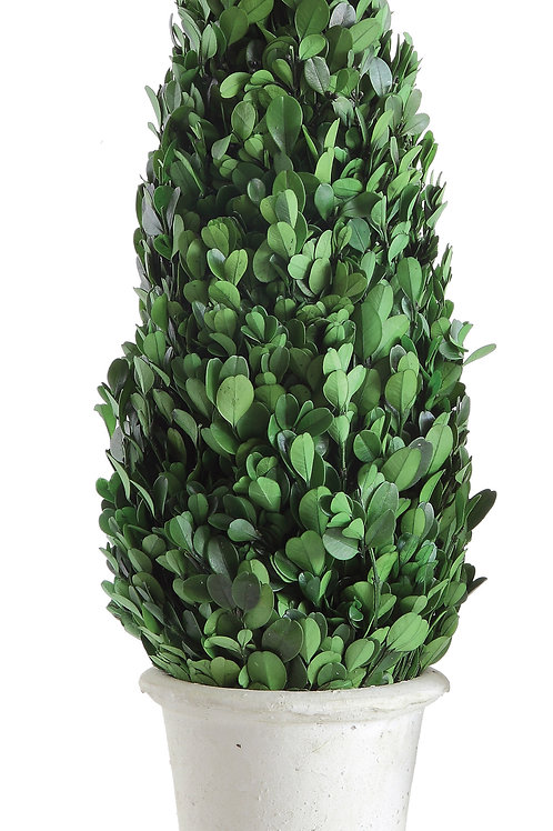 """17"""" Preserved Boxwood Cone Topiary in Clay Pot"""