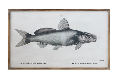 Vintage Reproduction Catfish on Canvas in Wood Frame Wall Decor