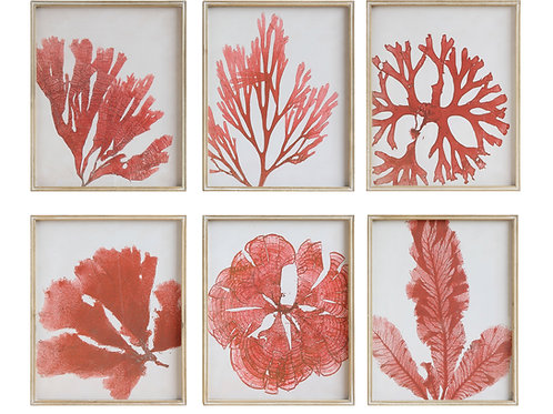 Coral Image Wall Decor with Wood Frame (Set of 6 Designs)