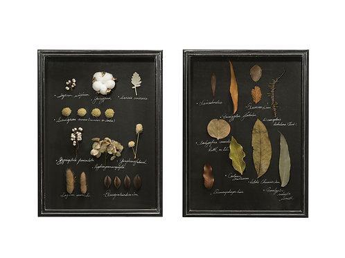 Dried Botanicals in Rectangle Shadowbox Frame (Set of 2 Styles)