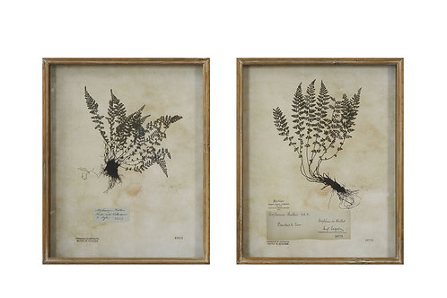 Ferns Shadowbox Framed Wall Decor (Set of 2 Designs)