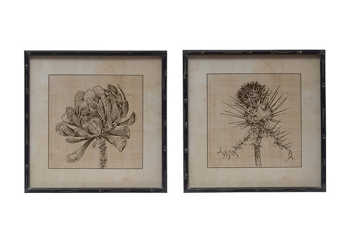 Botanical Sketches Wall Decor in Fir Wood Frames (Set of 2 Styles)