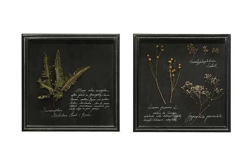 Dried Botanicals in Square Shadowbox Frame (Set of 2 Styles)