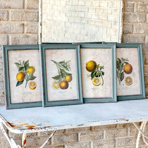Citrus & Blossom Framed Prints, 4 Assorted Styles