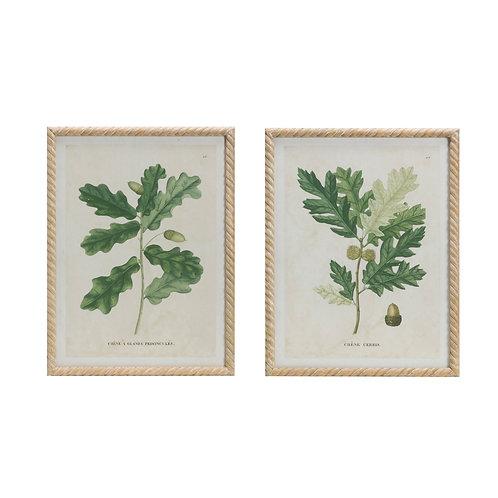 Oak Print Vintage Reproduction Wall Art (Set of 2 Styles)