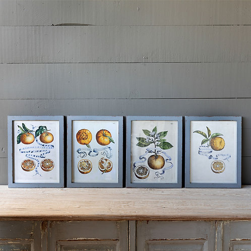 Citrus & Ribbon Framed Prints, 4 Assorted Styles