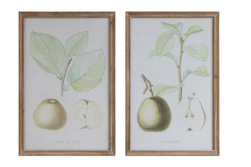 Pear Image Wood Framed Wall Decor (Set of 2 Designs)