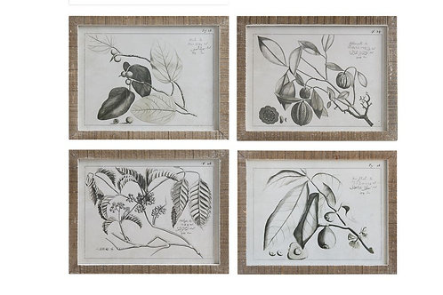 Fruit Branch Framed Photos (1)