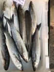 Fish Market Crete