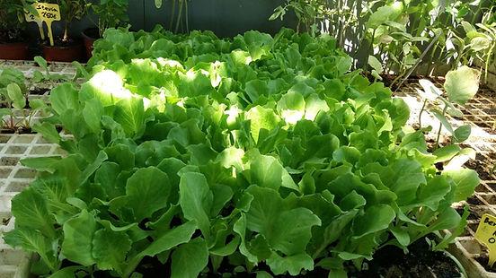 Semillas, plantas y Productos ecológicos