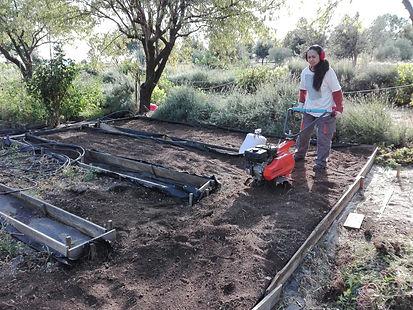 Mantenamiento y prepara tu huerto. Ofrecemos cursos d iniciacion de huerto.