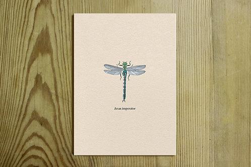 Postkarte Nr. 0016 - Königslibelle