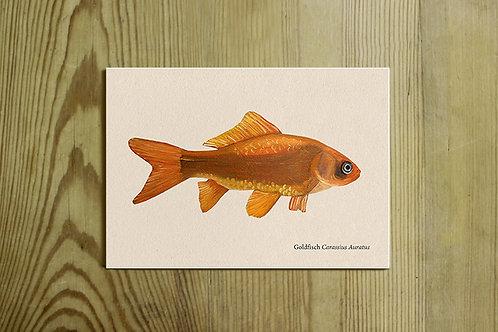 Postkarte Nr. 0021 - Goldfisch