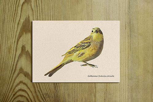 Postkarte Nr. 0022 - Goldammer