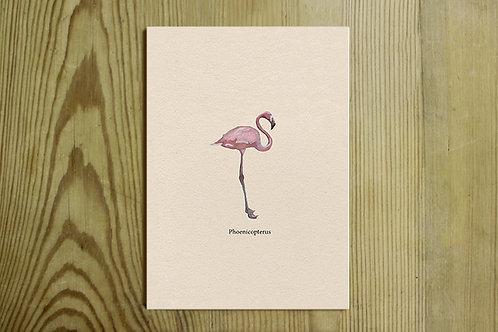 Postkarte Nr. 0017 - Flamingo