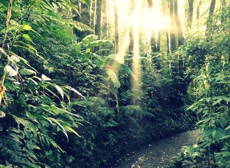 Komorebi Cloudforest