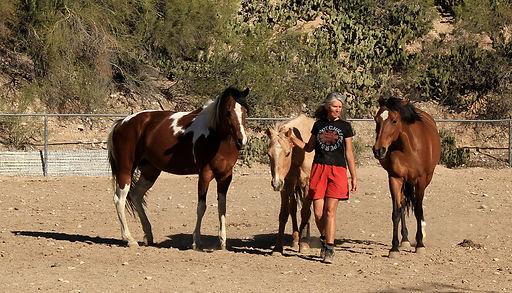 herd 3 walk 2.jpg