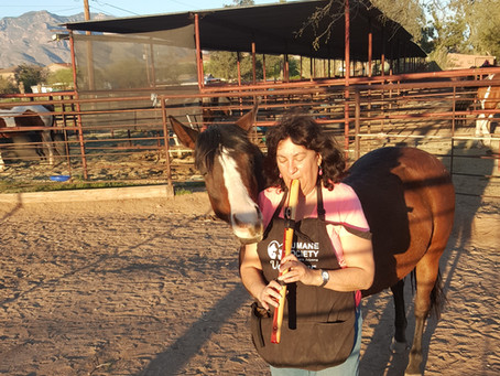 New Horse Rescue and the Flute