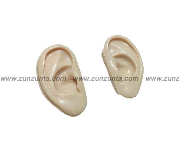 Modelo orejas escala 7.5 cm para prácticas (sin puntos)
