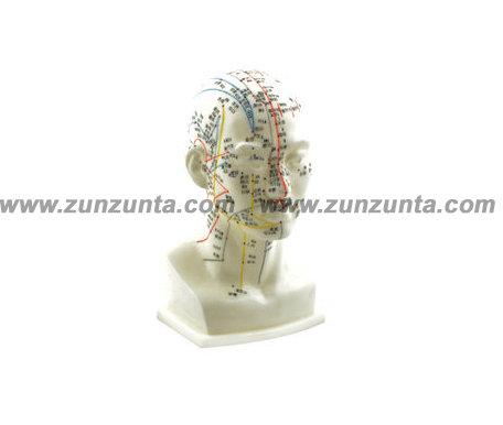 Modelo de cabeza (20 cm)
