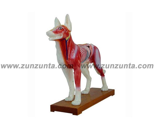 Modelo de perro (29 cm)